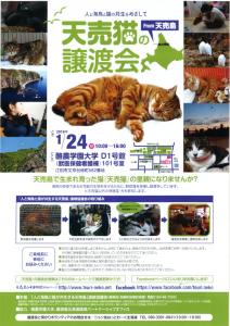 【2016/01/24】天売猫の譲渡会(酪農学園大学)