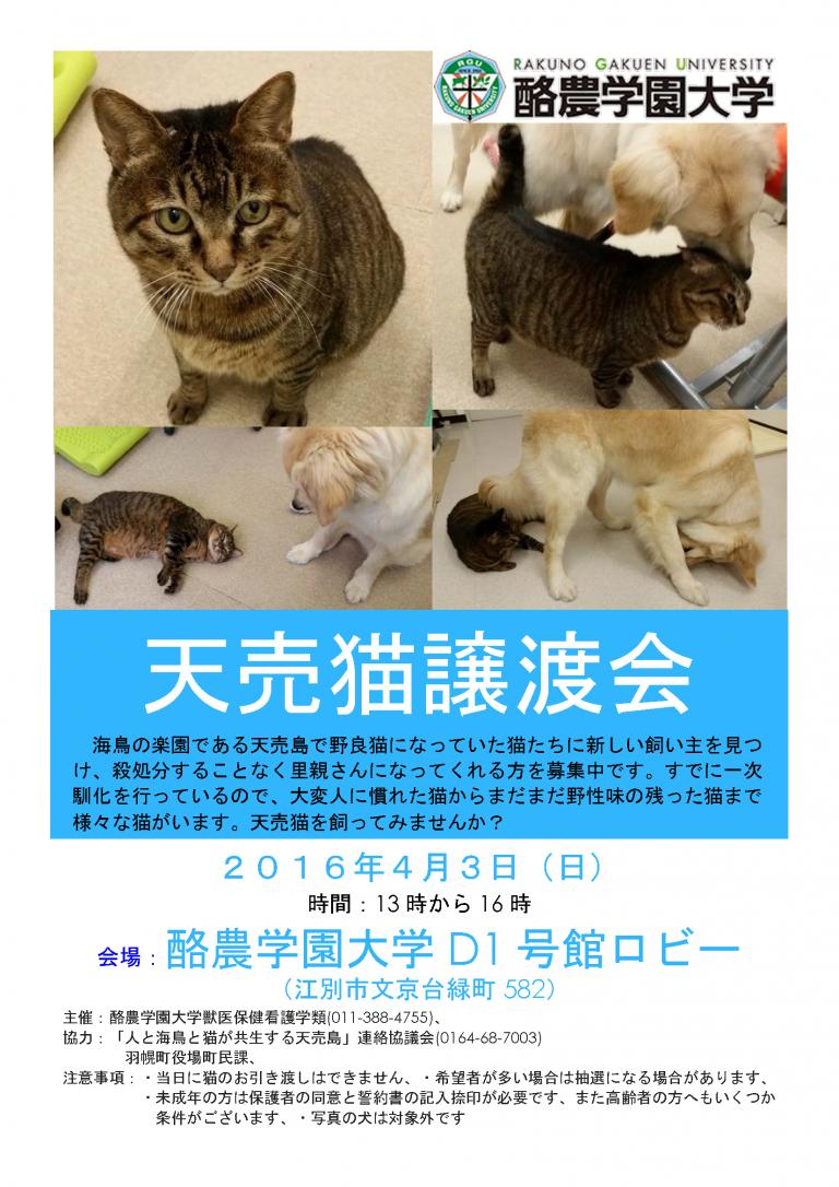 【2016/04/03】天売猫譲渡会(酪農学園大学)