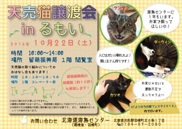 【2016/10/22】 天売猫の譲渡会 in るもい