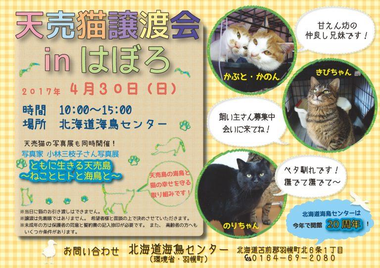 【2017/04/30】 天売猫の譲渡会 in はぼろ