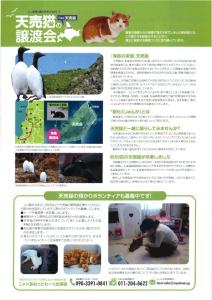 天売猫譲渡会_酪農大学_2016_0124_02