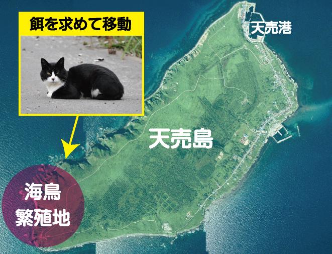 天売島01
