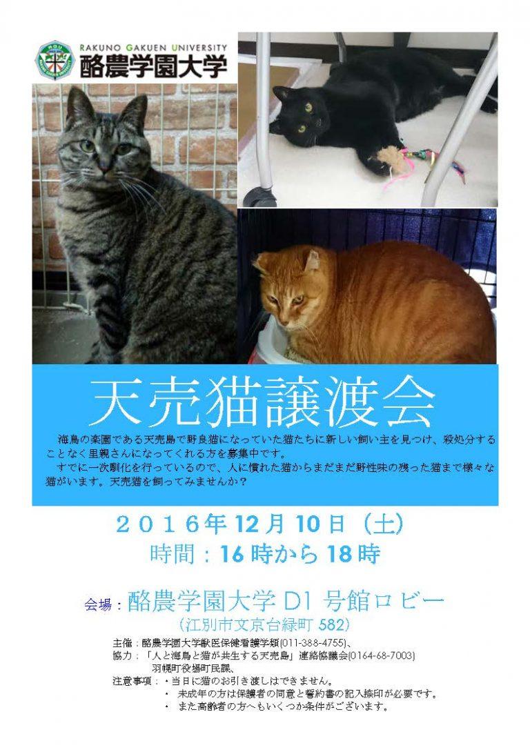 【2016/12/10】天売猫譲渡会(酪農学園大学)